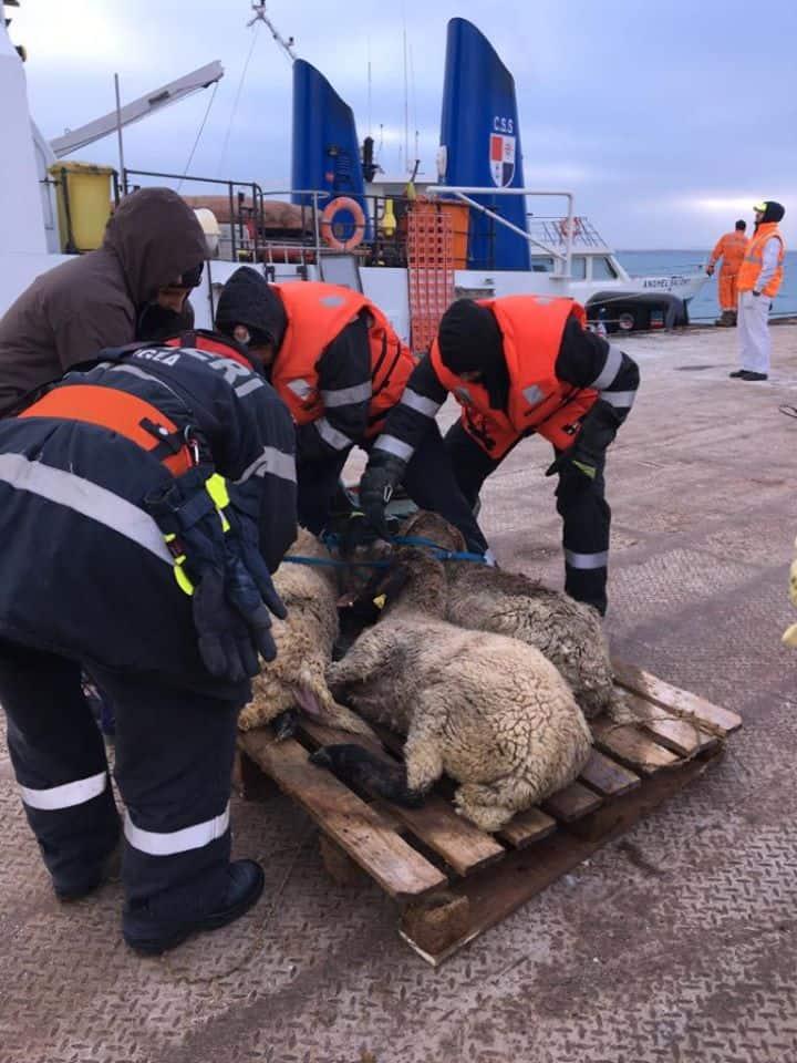 Rescue operation, photo: Four Paws and ARCA/Letea Wild Horses